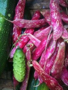 Borlottobönor, gurka och squash
